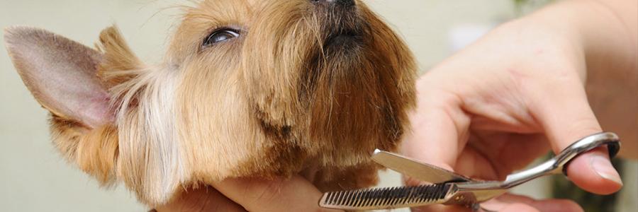 Dog Grooming Cockermouth